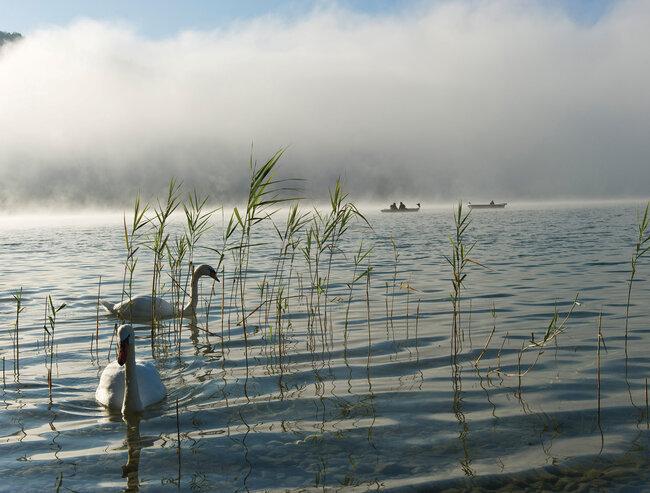 Swans and fishing boats on Lake Wolfgang