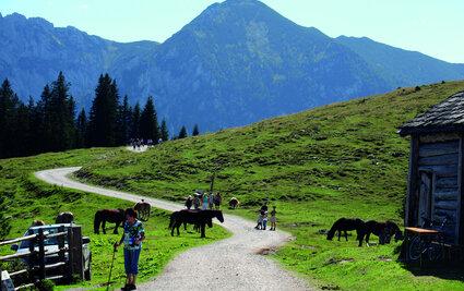 Postalm mit Pferden, © WTG, Alex Savel