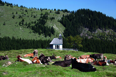 Postalm Kapelle mit Kuhherde, © WTG, Alex Savel